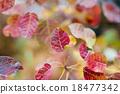 樹葉 18477342