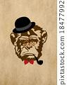신, 원숭이, 몽키 18477992