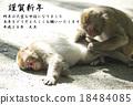 新年贺卡 贺年片 猴子 18484085