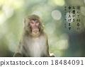 新年贺卡 贺年片 猴子 18484091