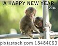 新年贺卡 贺年片 猴子 18484093