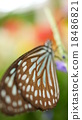 蝴蝶 蟲子 漏洞 18486821
