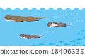 수영 수달 가족 18496335