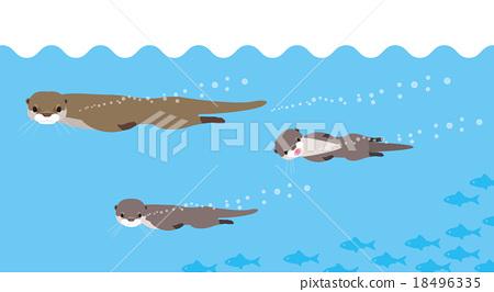 Swimming coward family 18496335