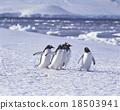 企鵝 巴布亞企鵝 白色 18503941
