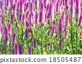 花朵 花卉 花 18505487