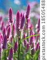 花朵 花卉 花 18505488