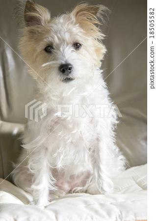 Staring dog 18505582