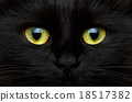 Cute muzzle of a black cat closeup 18517382