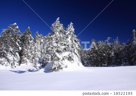 Stock Photo: frost covered tree, frost-covered tree, snow scene