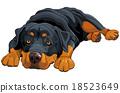 Rottweiler 18523649