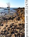 seaweed dead tree 18532479
