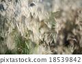 grass, reeds, bokeh 18539842