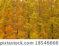 ต้นเมเปิล,ธรรมชาติ,ไม้ 18546666