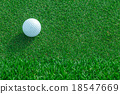 golf ball on the grass 18547669