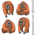 猩猩 住在森林中的人 森林中的人 18554145