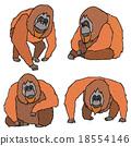 猩猩 住在森林中的人 森林中的人 18554146