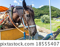 Horse eating dry grass 18555407