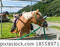 Horse feeding with hay 18558971