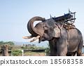 Elephant 18568358