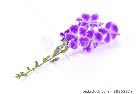 Purple flowers isolated on white background stock photo 18568878 purple flowers isolated on white background mightylinksfo