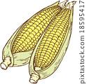 玉米 18595417