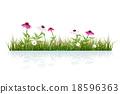 Green grass and echinacea purpurea flower 18596363
