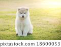Cute siberian husky puppy sitting 18600053