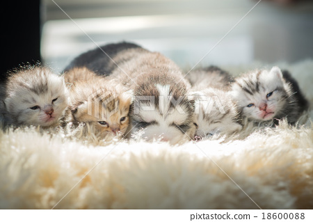 Puppy lying with kittens 18600088