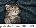 Close up of cute tabby  kitten sleeping 18600093