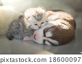 Puppy lying with kittens 18600097