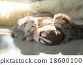 เด็ก,ทารก,เด็กทารก 18600100