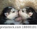 Newborn siberian husky puppies sleeping 18600101