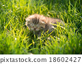 Cute tabby kitten sleeping on green grass 18602427