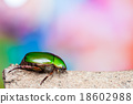 Green beetle 18602988