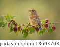 gooseberry stand 18603708