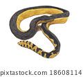 sea snake 18608114