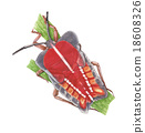 bug painting 18608326
