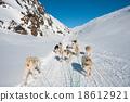 Dog sledding tour in Tasiilaq, Greenland 18612921
