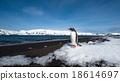 Gentoo penguin, Deception Island, Antarctica 18614697