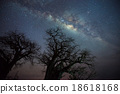 Milky way over baobab tree, Tanzania 18618168