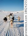 Dog sledding in Greenland 18624255