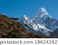 Himalayan Tahr with Ama Dablam, Nepal 18624262