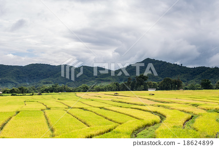 Thai Rice Farm 18624899