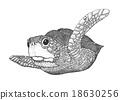 Sea Turtle Engraving Illustration 18630256