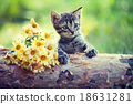 Cute little kitten on wooden snag 18631281