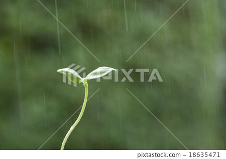 Futaba in the rain 18635471