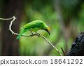 Green bird on leaf 18641292