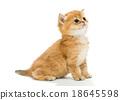 Little kitten 18645598