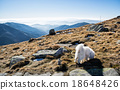 White dog and Low Tatras mountains, hiking theme 18648426